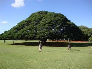 日立の樹(新婚旅行)