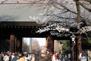 靖国神社 - 神門と桜