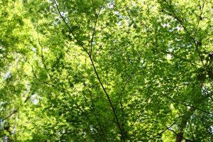 南禅寺 - 葉緑