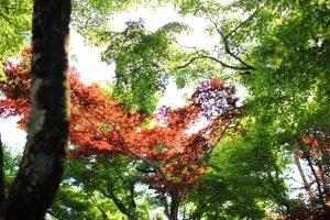 禅林寺 - 境内の木々