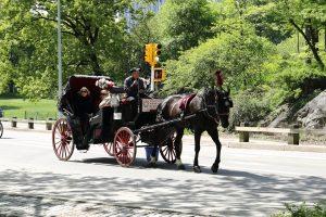 セントラルパーク - 馬車