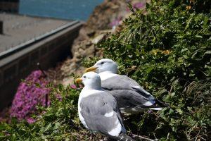 アルカトラズ 海鳥