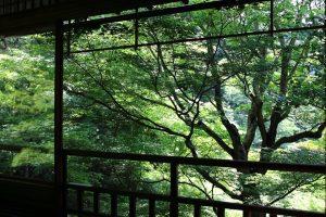 瑠璃光院 - 山紅葉