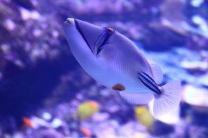 面白い顔の魚